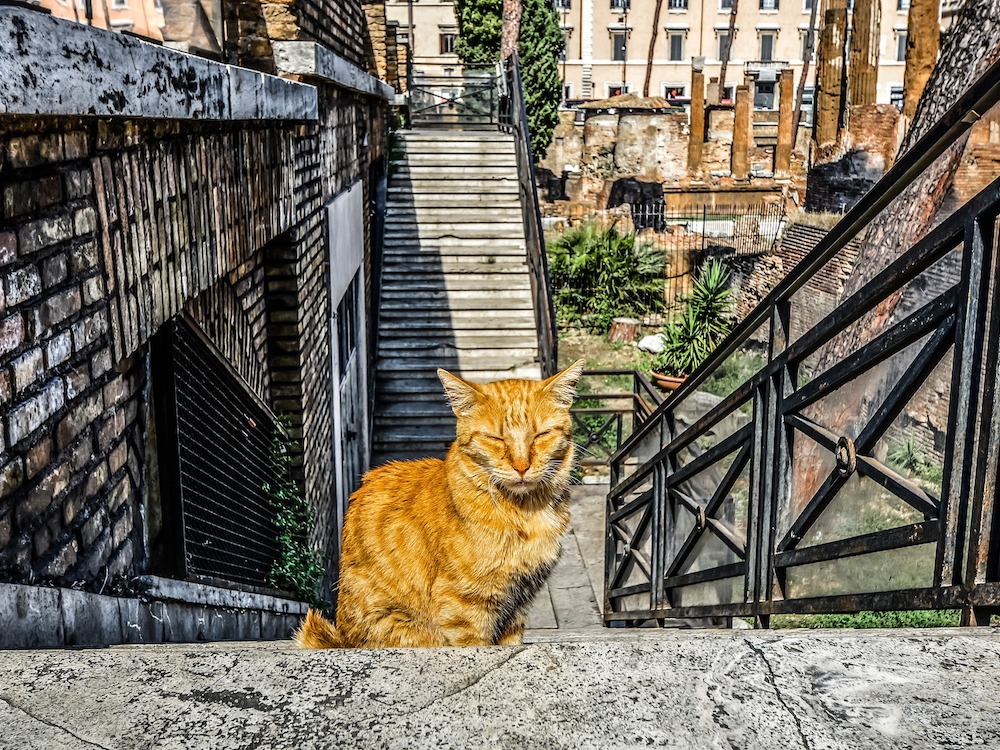 Katten in Rome